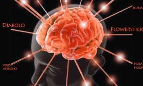 wiedza-mozg