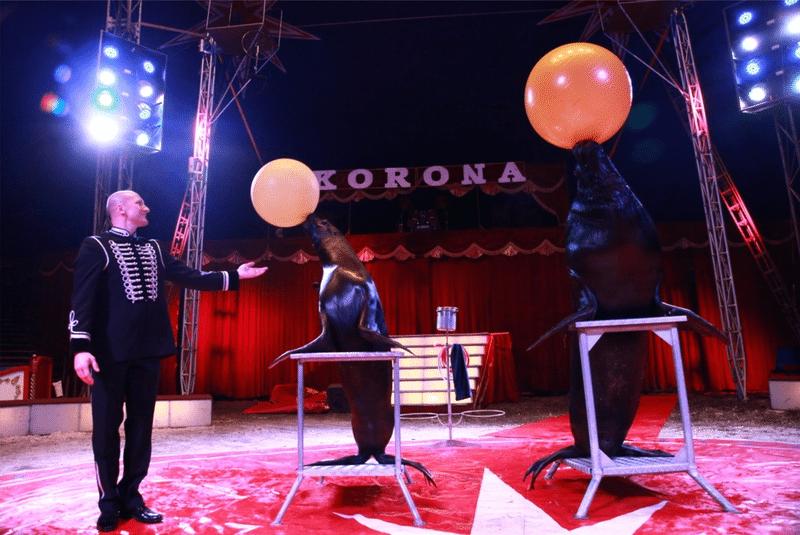 Foki w cyrku Korona