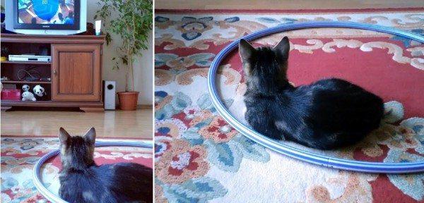 kot w hula